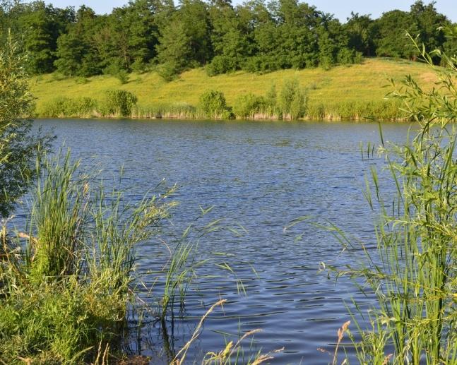 На Волині у недобросовісного орендаря хочуть забрати землю зі ставком
