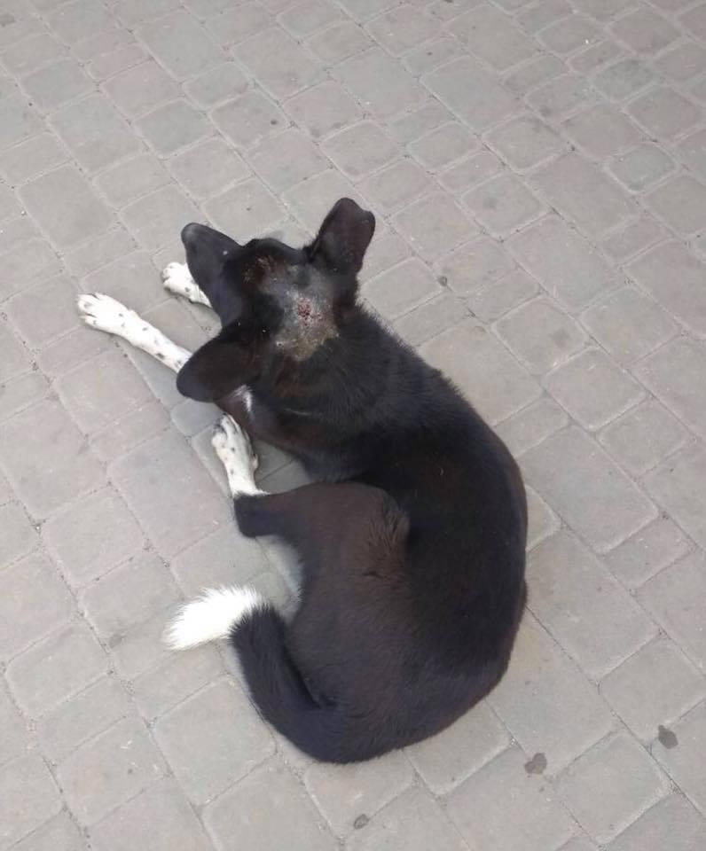 У Ковелі невідомі понівечили собакам голови. ФОТО 18+