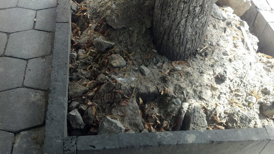 На центральній вулиці Луцька коріння дерев засипали будівельним сміттям. ФОТО