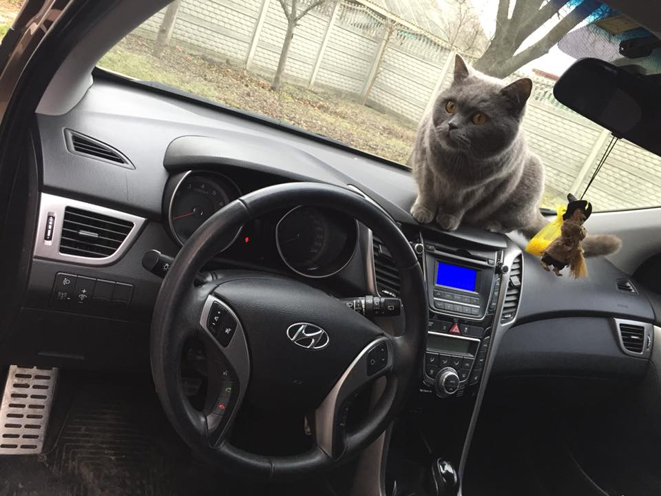 У Луцьку шукають жінку, яка викрала кота