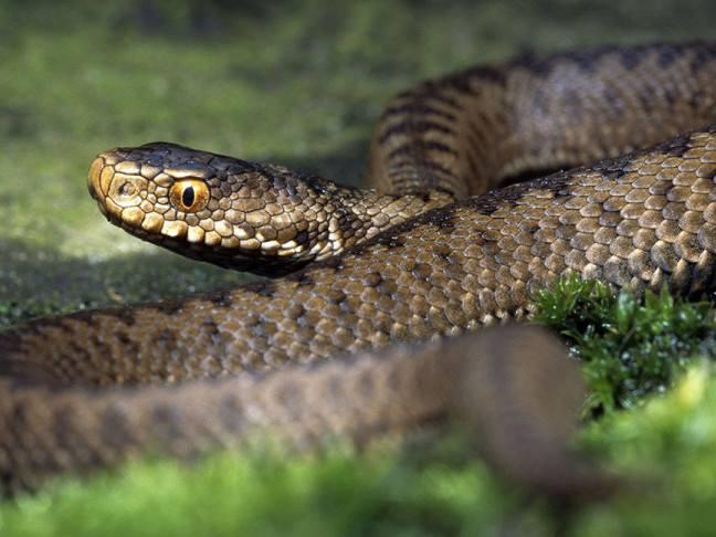 На Волині 17 людей потрапили до лікарні через укуси змій