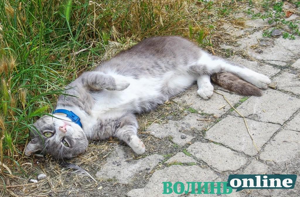 Літо та луцькі коти. ФОТОРЕПОРТАЖ