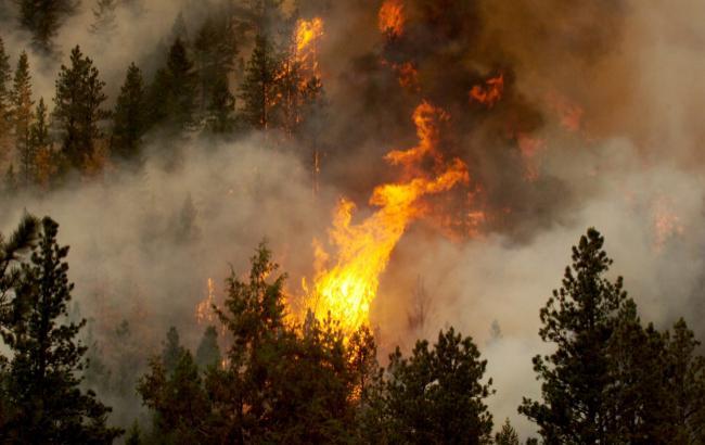 У Канаді вирують понад 60 лісових пожеж, половину не можуть взяти під контроль