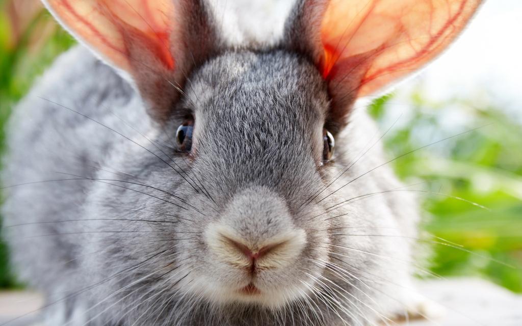 За крадіжку кроликів лучанину загрожує до трьох років тюрми