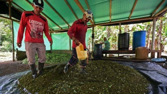 Як дрони у Колумбії шукають кокаїнові ферми
