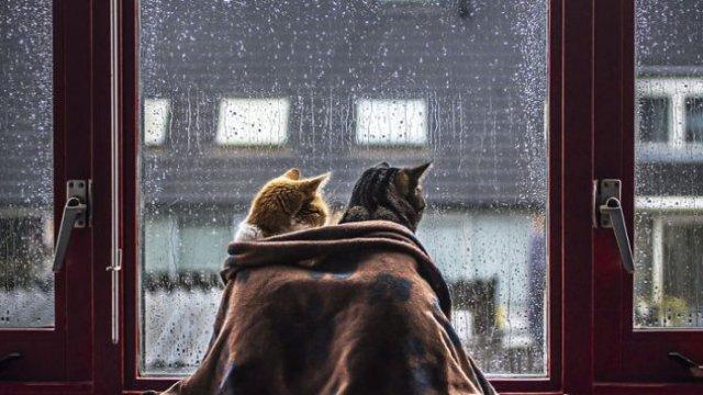 Волинян попереджають про грози та сильні дощі