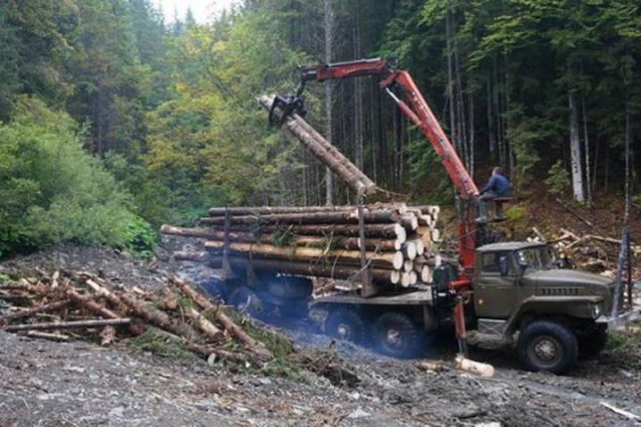 Волинські фіскали перевірятимуть лісгоспи області
