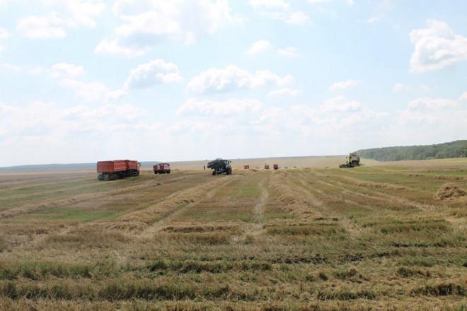 На Волині зібрали близько 97 % посівів ранніх зернових культур