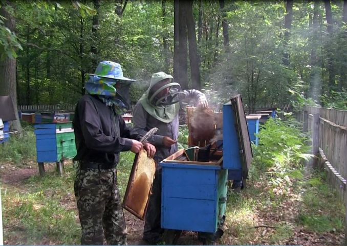 У лісгоспі на Волині провели останнє у цьому році викачування меду. ФОТО