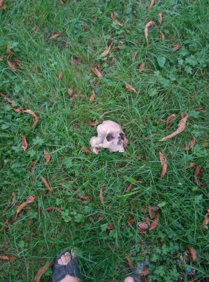 У Берестечку біля дитячого майданчика знайшли людський череп. ФОТО