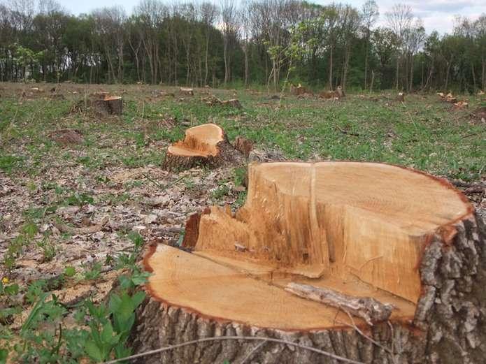 На Волині чоловік загинув під час самовільної рубки лісу