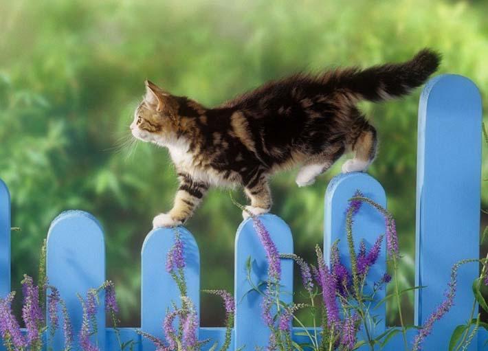 У Луцьку відкриють виставку, присвячену котам