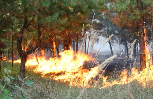 Волинян попереджають про ризик виникнення пожеж в екосистемах