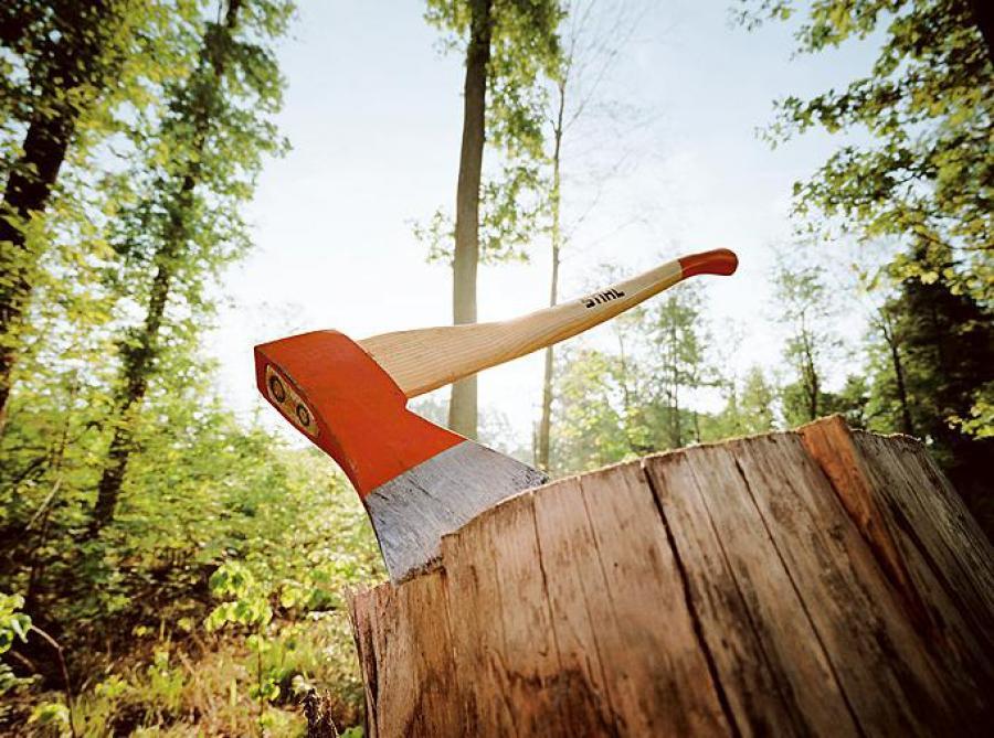 Волинянину загрожує 50 тисяч гривень штрафу за незаконну рубку лісу