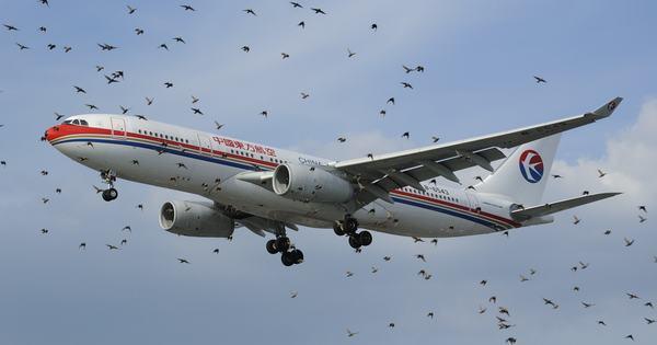 Дрони навчили відганяти зграї птахів від аеропорту