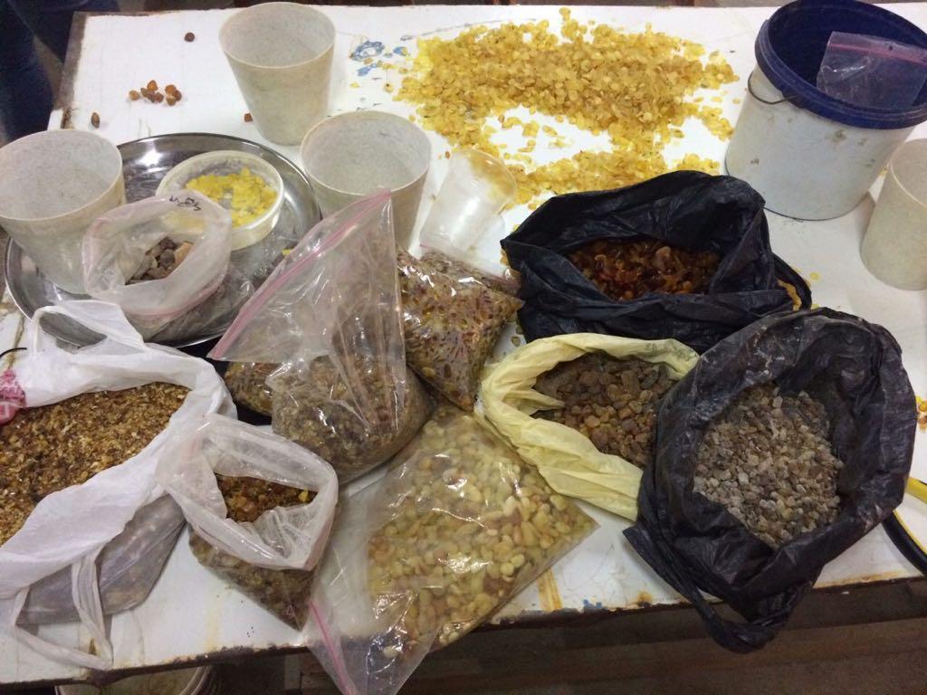 На Волині прикордонники виявили понад 60 кілограмів «сонячного каміння». ФОТО. ВІДЕО