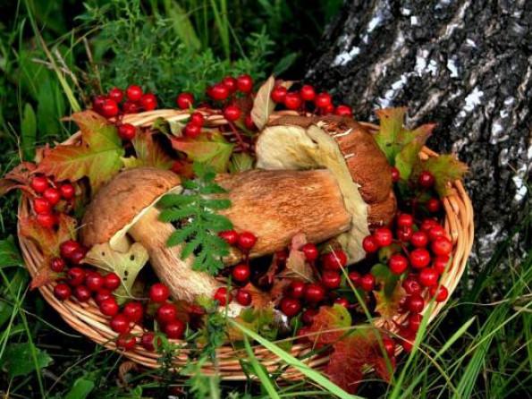 Заготівля дарів лісу додала бюджетам Волині майже п'ять мільйонів гривень