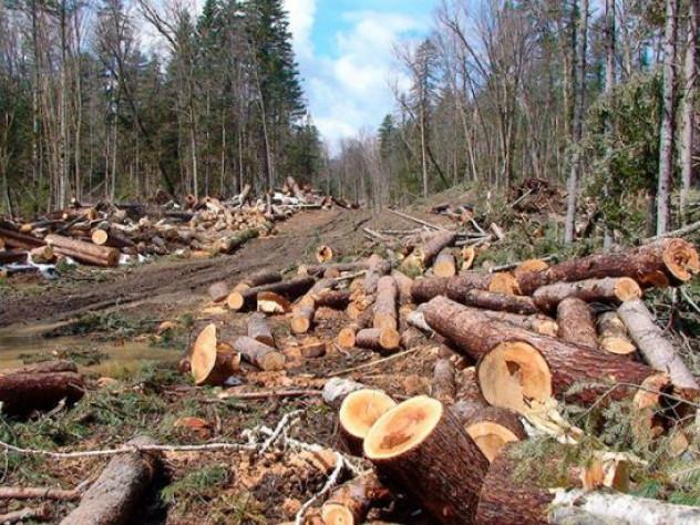 У Ківерцівському районі викрили факти незаконних рубок лісу