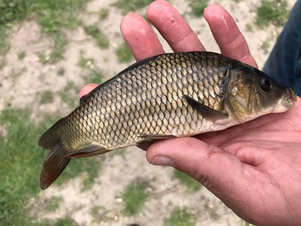 У Луцькраді нагадують, що у каналах в парку не можна ловити рибу