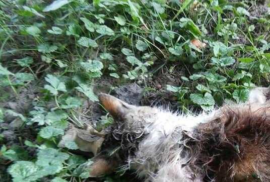 У Луцьку нелюди по-звiрячому вбили кішку. ФОТО 18+