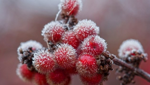 Синоптики попереджають про нічні заморозки у ряді областей