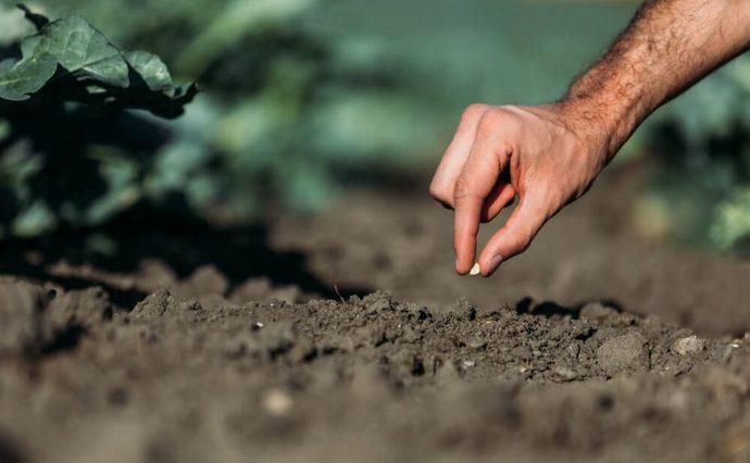 На Волині в орендаря вимагають у семеро більшої плати за землю