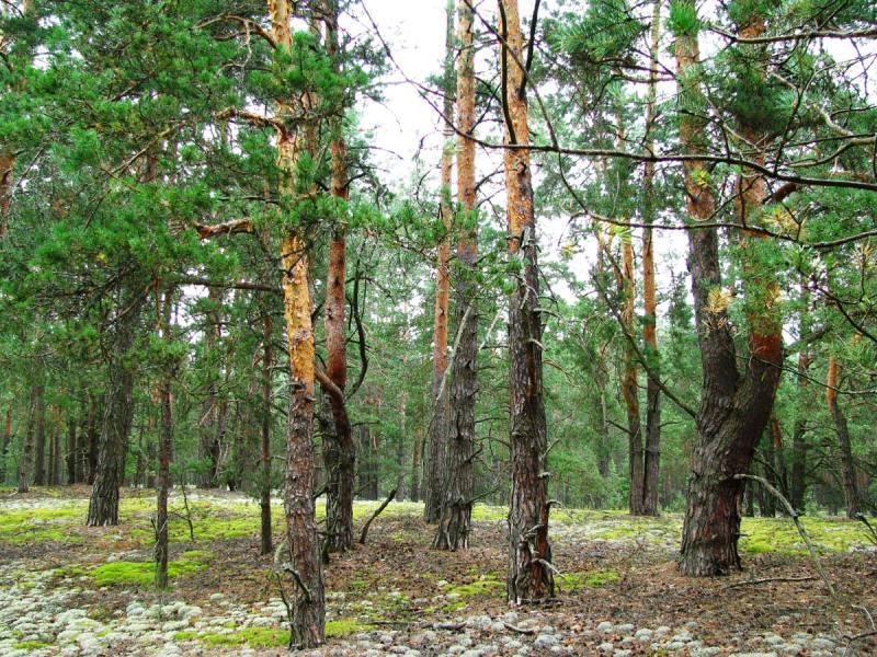 Волинські депутати звернулися до керівництва держави з проханням не оподатковувати лісові землі подвійно