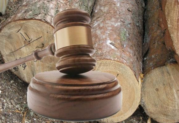 На Волині відбувся аукціон із продажу необробленої деревини