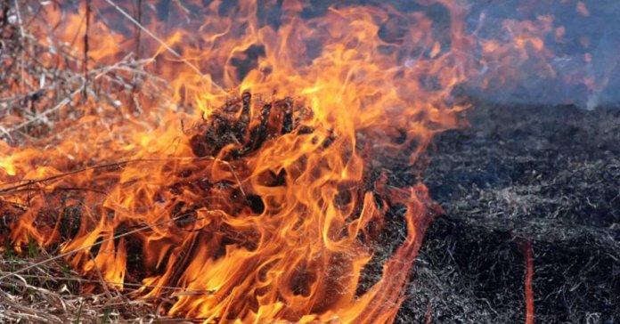 На Волині у жовтні за спалювання листя покарали 21 людину