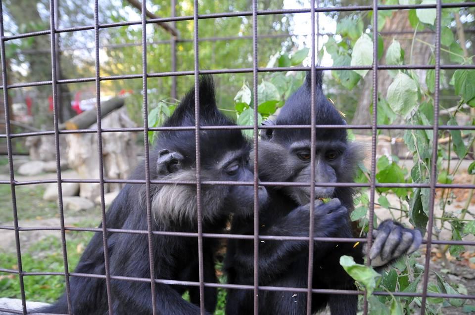У Луцькому зоопарку – нові мешканці. ФОТО