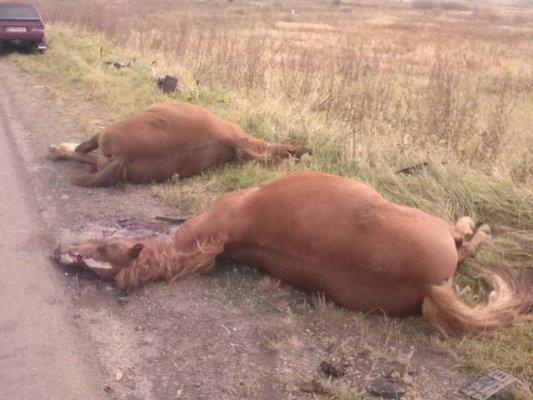Лучанин на Львівщині насмерть збив двох коней