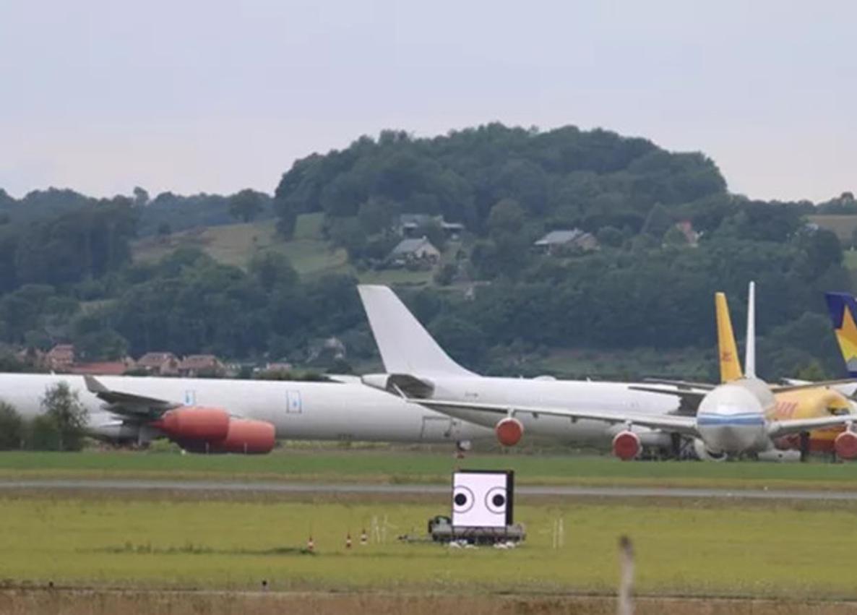 Дослідникі відігнали птахів від аеропорту зображенням широко відкритих очей