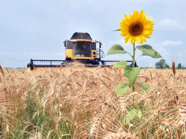 На Волині зросли ціни аграрної продукції