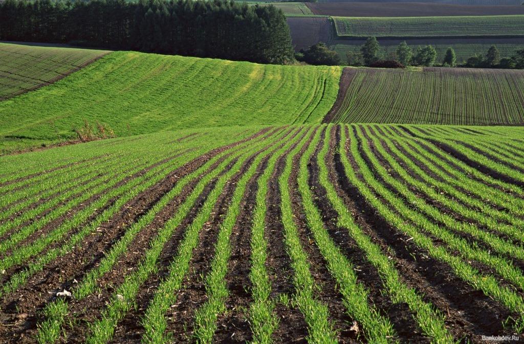 На Волиині фермерів зобов'язали звільнити самовільно зайняту землю