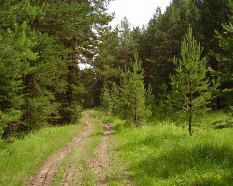 На Волині лісокористувачі сплатили до бюджетів понад 65 мільйонів гривень