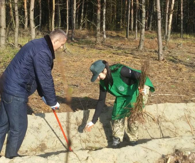 У волинському лісництві створили майже гектар лісових культур