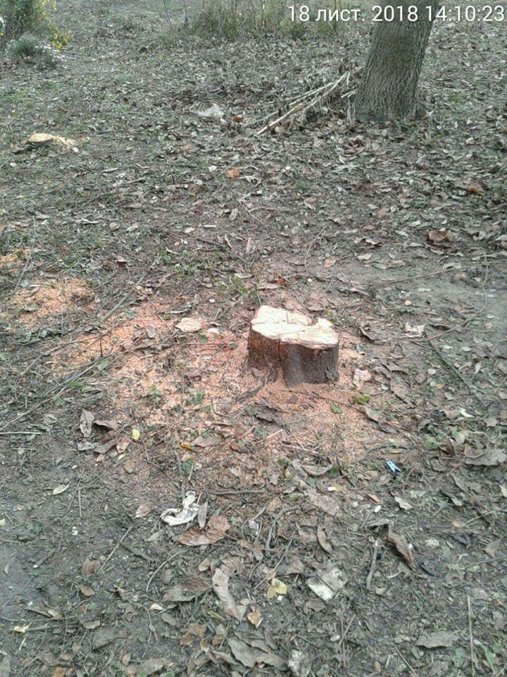На луцькому проспекті незаконно зрізали фруктові дерева