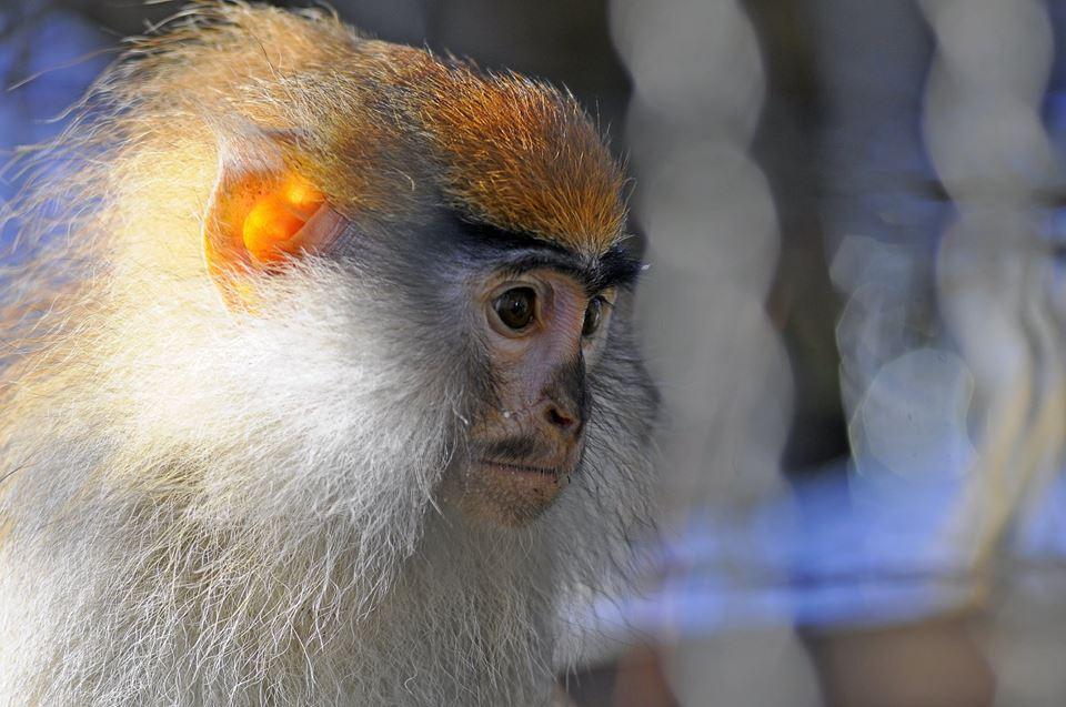 У соцмережі опублікували милі фото мавпочок Луцького зоопарку. ФОТО