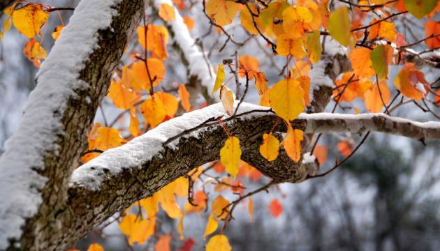 Синоптики сказали, де на вихідних ітиме сніг