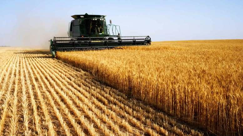 Вже п'ятий рік поспіль на Волині збирають понад мільйонні врожаї зернових культур