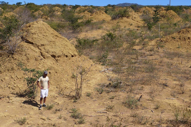 У Бразилії вчені дослідили термітники віком до чотирьох тисяч років та площею з Британію
