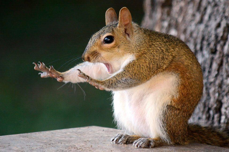 Обрали найсмішніші фото тварин 2018 року. ФОТО
