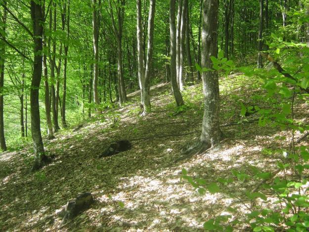 Волинських дітей вчитимуть лісництву