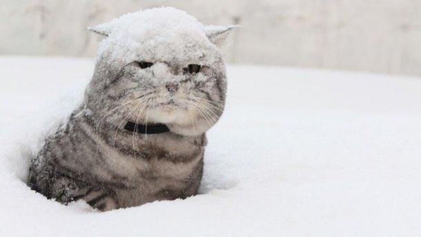 Синоптики сказали, коли Україну засипле снігом