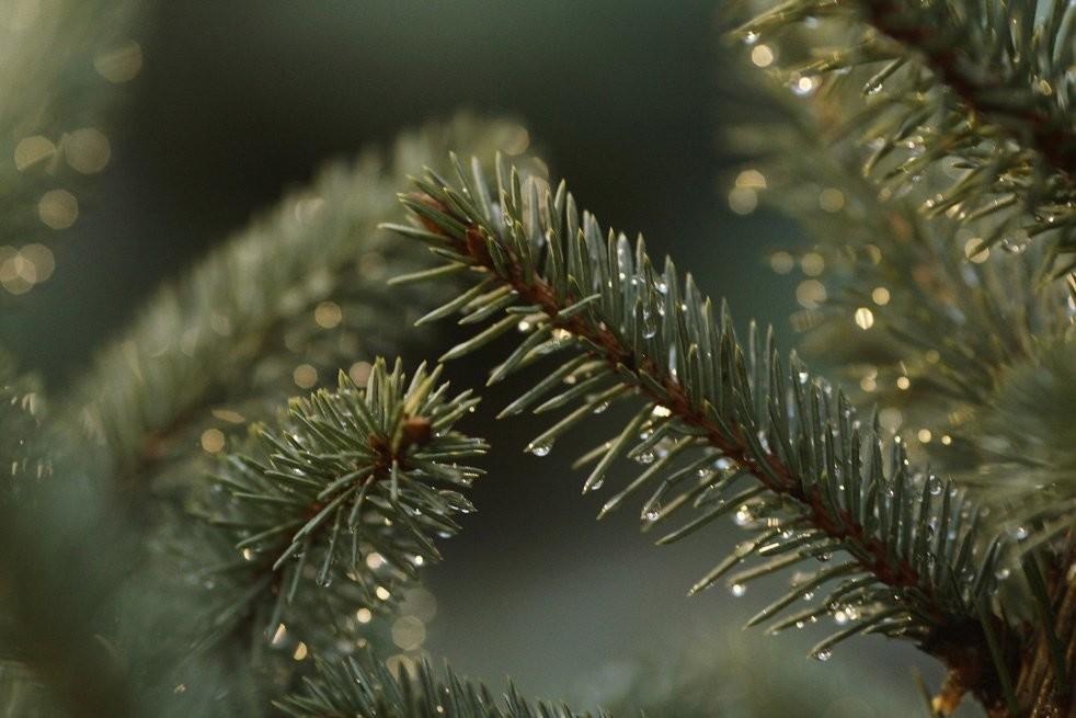У передноворічний період на Волині посилюють охорону лісів
