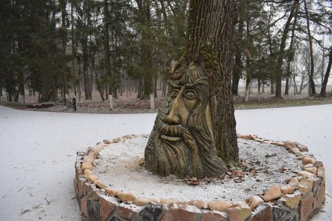 На Волині в 150-річного дуба з'явилось людське обличчя