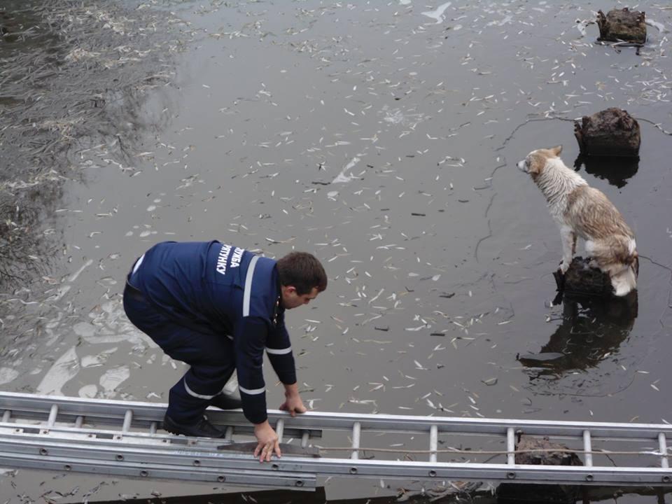 На Волині рятувальники дістали з річки собаку