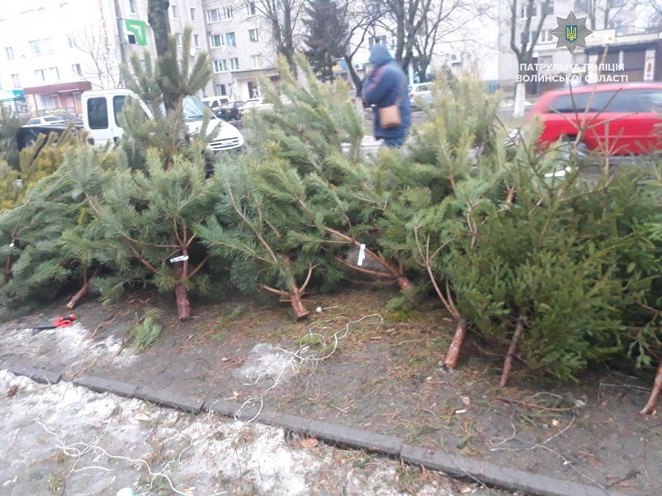 У Луцьку новорічні дерева реалізовуються без порушень
