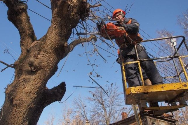У Луцьку витратять 199 тисяч на обрізку дерев