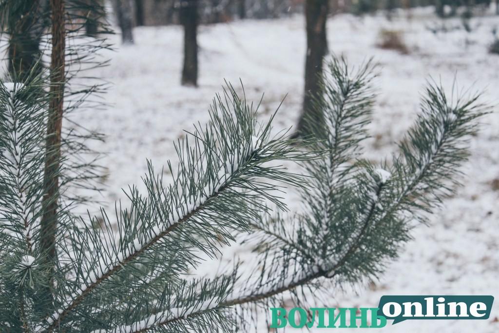 Засніжене перше грудня у луцькому парку. ФОТОРЕПОРТАЖ
